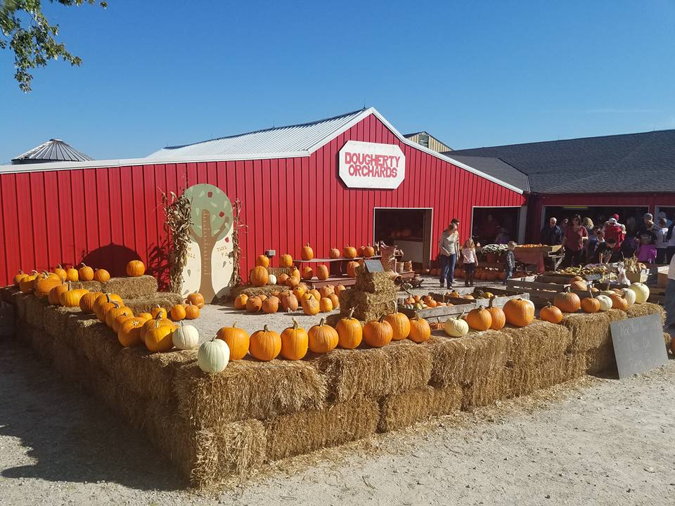 jacks-day-out-orchard-pumpkins