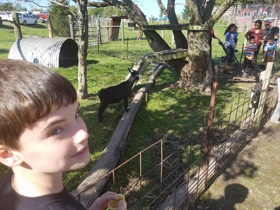 jacks-day-out-orchard-sammy